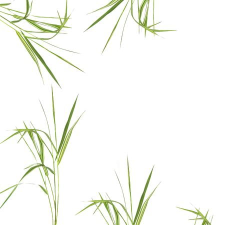 Zen abstract of bamboo grass over white background.