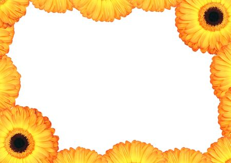 golden daisy: Yellow gerbera daisy flower and petal border with a central white background.