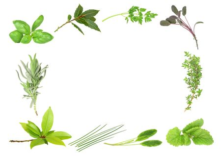 Herb leaf selection forming a border of fresh  bay, lavender, basil, dark bay, coriander, purple sage, thyme, lemon balm, variegated sage and  chives. Starting bottom left in clockwise order. Over white background.