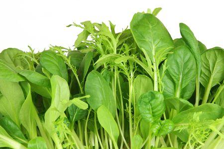 Salad leaf selection of pak choi, tatsoi and chard, over white background. photo