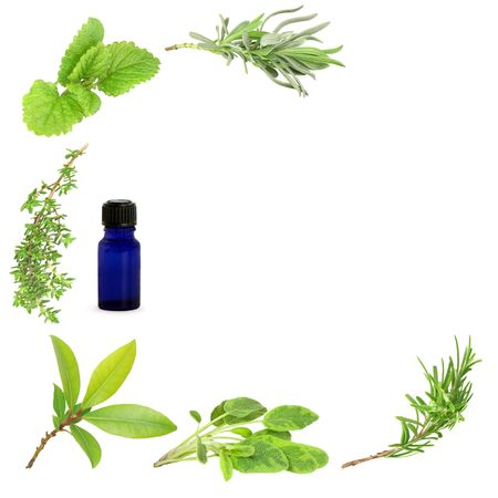 Herb leaf sprigs of lavender, lemon balm, thyme, bay, sage and rosemary forming a border with an aromatherapy essential blue glass oil bottle to one side, over white background. photo