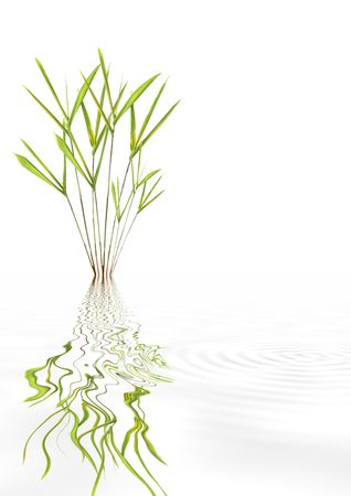 Bamboo leaf grass zen abstract with reflection over rippled water, over white background. Stock Photo - 3868707