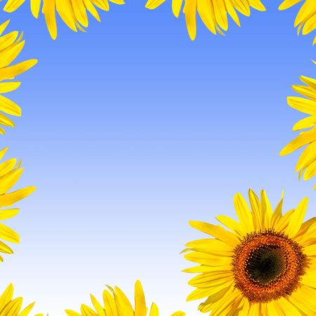 full frame: Sunflower abstract frame design. Over blue background with white glow.