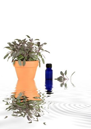 Sage herb growing in a terracotta pot with leaf sprig and aromatherapy essential oil blue glass bottle with reflection over rippled grey water. Against white background.  photo