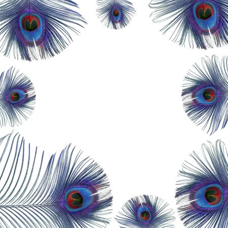 Iridescent eyes of blue peacock feathers creating a framed border over white background.