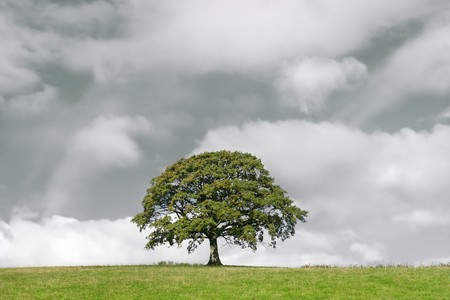 Oak tree in summer standing alone in a field. Set against a stormy sky with cumulus clouds. Stock Photo - 3974561