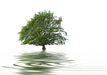 grey water: Tree in full leaf in summer with reflection over ripped grey water, against white background.  Stock Photo