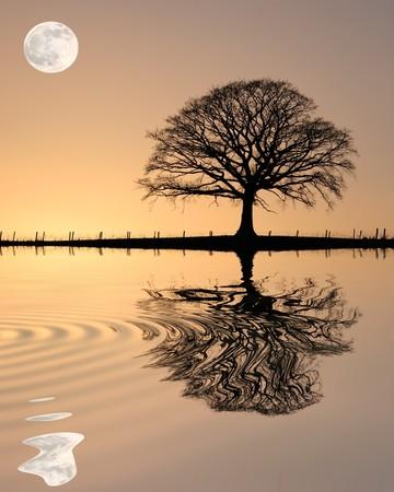 Eiken boom in de winter bij zons ondergang in silhouet tegen een gouden hemel en de volle maan met reflectie over golfde water.