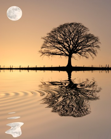 Oak tree in winter at sunset in silhouette against a golden sky and full moon with reflection over rippled water.