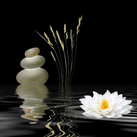 Zen abstract of grey spa stones, a white lotus lily and wild grasses with reflection over rippled water, against black background. photo