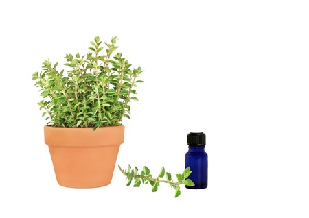 Herb oregano growing in a terracotta pot with a specimen leaf sprig and an aromatherapy essential oil blue glass bottle, over white background. Stock Photo - 4114189