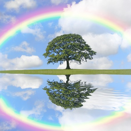 Oak tree  in summer against a blue sky with clouds and a rainbow, with reflection in rippled water.  photo