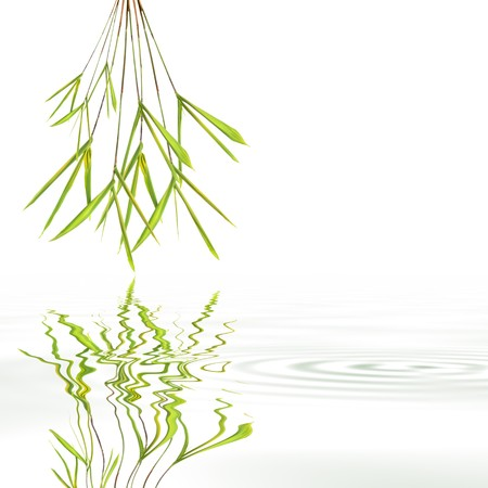 Bamboo leaf grass abstract with reflection over rippled gray water, against white background. photo
