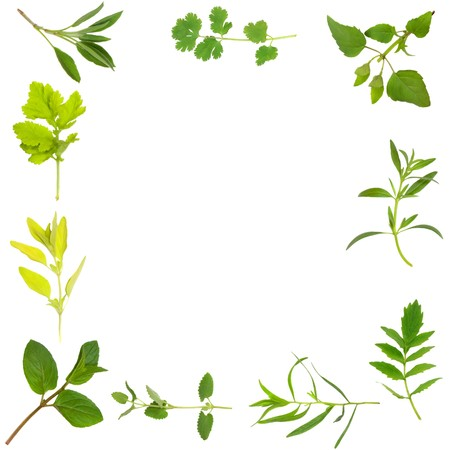 hyssop: Herb leaf selection forming an abstract frame of chocolate mint, golden marjoram, feverfew, sage, coriander, bergamot, hyssop, valerian (vallium substitute) tarragon, and catmint. Over white background. Clockwise order from bottom left hand side. Stock Photo