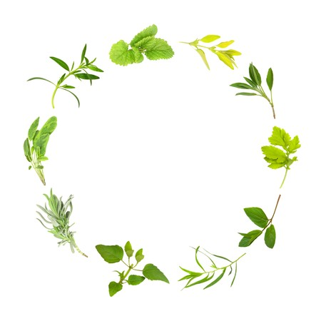 balm: Herb Leaf circle of lemon balm, golden marjoram, sage, feverfew, chocolate mint, tarragon,  bergamot, lavender, variegated sage, hyssop over white background. In clockwise order from top.
