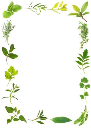 plantas medicinales: Selecci�n de hojas de hierbas formando un marco sobre fondo blanco. Foto de archivo