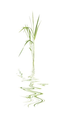 tough luck: Zen abstract of bamboo leaf grass with reflection over rippled water, against white background.
