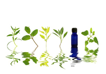hyssop: Herb leaf sprigs of hyssop, chocolate mint, golden marjoram, sage, and bergamot and an essential oil blue glass bottle with reflection over rippled water, over white background.