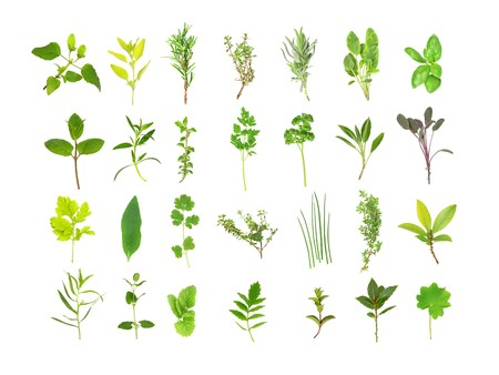 Large herb leaf selection, over white background.   photo