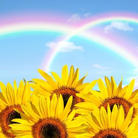 Sunflower abstract of  a double rainbow against a blue sky.