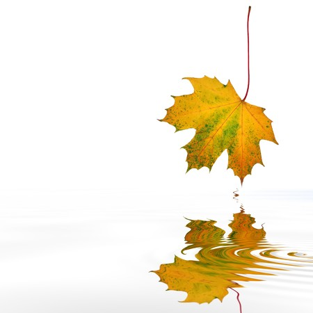 Maple leaf abstract in autumn colors with reflection over rippled water, over white background. Stock Photo