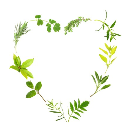 medicinal: Herb leaf selection forming a heart shape, over white background. Thyme, hyssop, golden marjoram, sage, valerian, (vallium substitute) tarragon, mint, bay, lavender and coriander.
