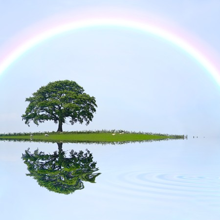 Oak tree on an island field in summer with pale blue sky and rainbow, with reflection over rippled water. photo