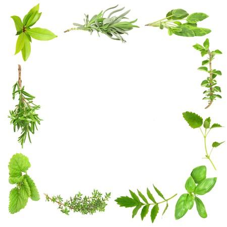 valerian: Herb foglia di frontiera di foglie di alloro, lavanda, salvia, valeriana, (vallium sostituto) basilico, timo, melissa, e rosmarino, oltre sfondo bianco.