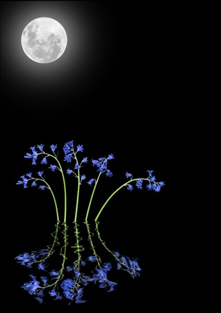 equinox: Bluebell flower abstract with reflection in rippled water and a glowing full moon on the spring equinox, over black background.
