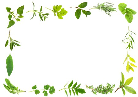 valium: Herb leaf selection forming a frame over white background.