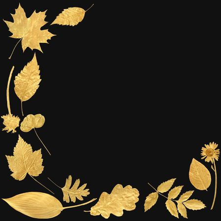 Golden leaf selection forming an abstract border, over black background.
