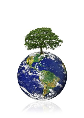 Planet earth featuring the American continents with an old oak tree in the position of north, over white background.  photo