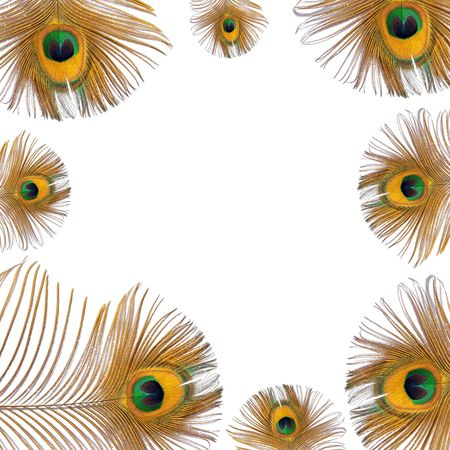 feathered: Burnished golden peacock feathers creating a framed border over white background.