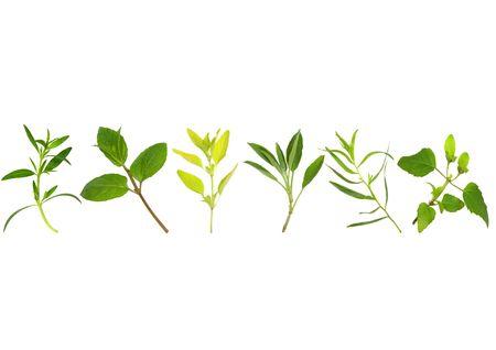 botanical remedy:  Herb leaf sprig selection over white background.