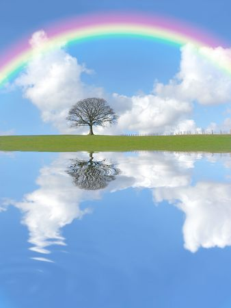 Oak tree in winter standing on an area of grass, with reflection over rippled water. Set against a blue sky with cumulus clouds and a rainbow. photo