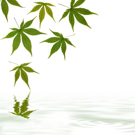 grey water: Maple leaf abstract design with reflection in rippled grey water, over white background. Stock Photo
