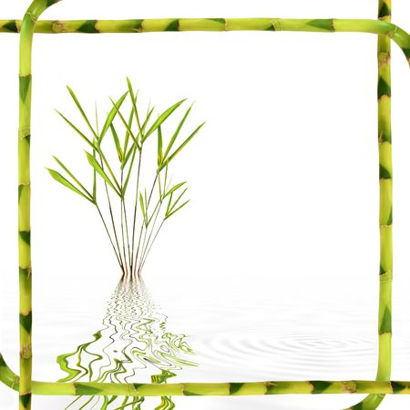 tough luck: Bamboo leaf grass with reflection in rippled grey water framed with lucky bamboo stems over white background.