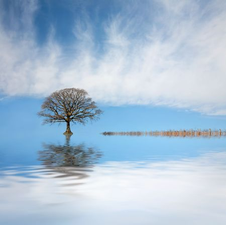 rippled: Oak tree in winter with submerged fence and reflection over rippled water with a blue sky and clouds to the rear. Stock Photo