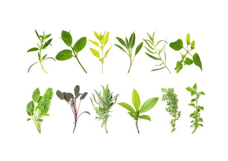 Herb leaf variety in two lines, over white background.   Stock Photo
