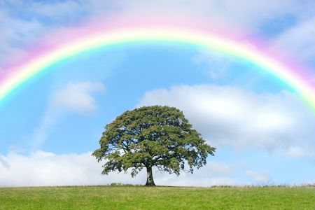 Oak tree in summer standing alone in a field, against a blue sky with clouds and a rainbow. Stock Photo - 4909645