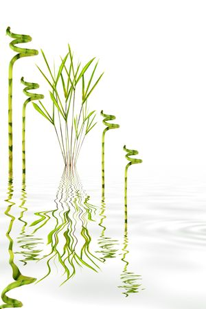 grey water: Zen garden abstract of bamboo leaf grass varieties with reflection in rippled grey water, over white background. Stock Photo