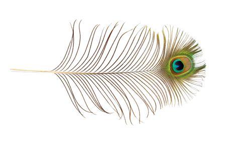 pluma de pavo real: Pluma de pavo real m�s aislado fondo blanco.