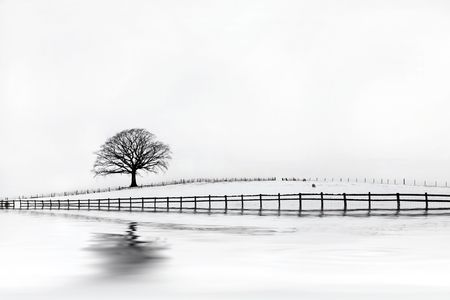 Oak tree in a field of snow in winter with an old wooden fence and a pale grey sky with reflection.  photo