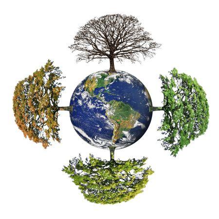 Roble resumen de las cuatro estaciones, primavera, verano, oto�o y el invierno en un mundo del planeta tierra con el continente americano, m�s de fondo blanco. Foto de archivo - 5022791