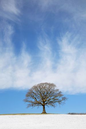 Oak tree in a field in winter with snow and a fence with a blue sky and clouds to the rear. Stock Photo - 5022799