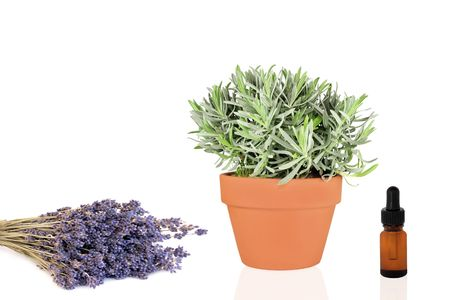 Lavender herb growing in a terracotta pot with dried flowers and aromatherapy essence dropper bottle, over white background. Stock Photo - 5111521