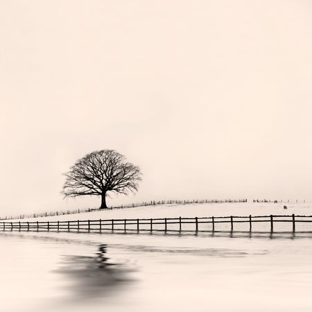 Oak tree in a field of snow in winter with an old wooden fence with abstract reflection. Sepia tint. Stock Photo - 5111510