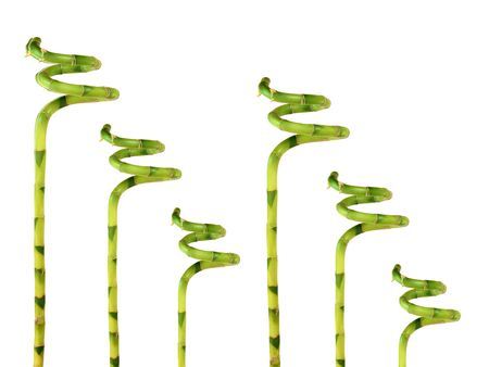 tough luck:  Six pieces of lucky bamboo grass in abstract design, over white background.