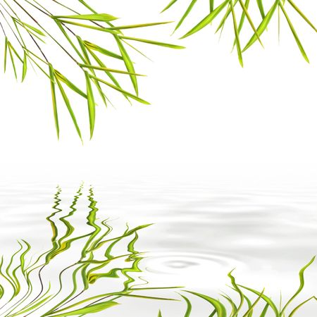 grey water: Bamboo leaf grass with reflection in rippled grey water, over white background. Stock Photo