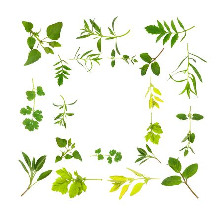 Herb leaf selection forming an abstract border, over white background. Stock Photo